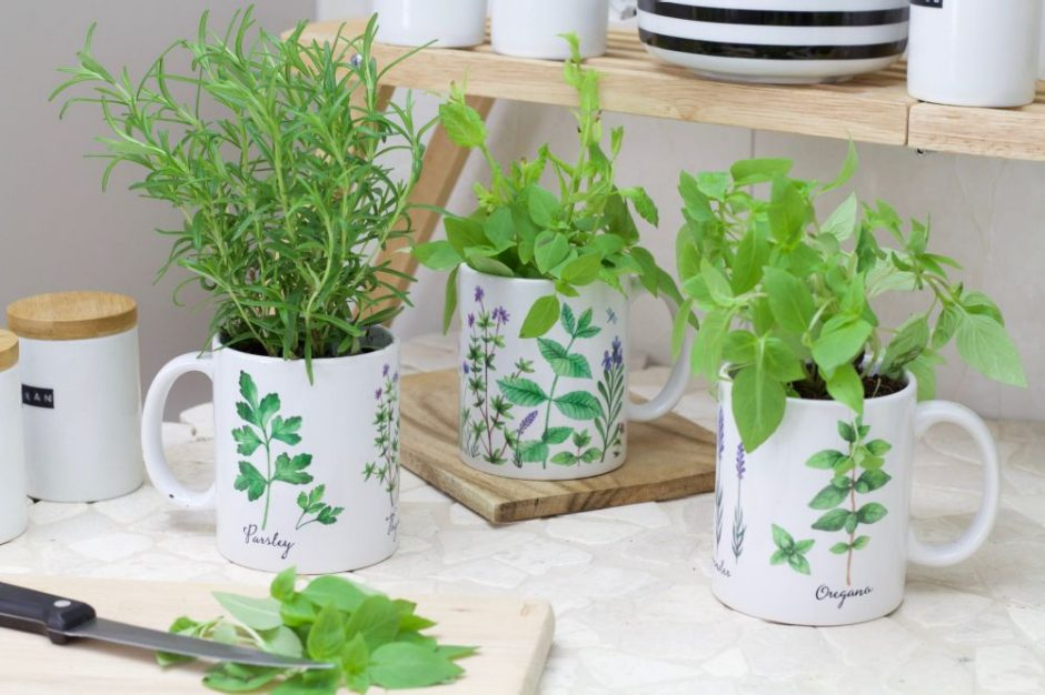 Gift idea: photo mugs designed with herb motifs with fresh herbs planted inside