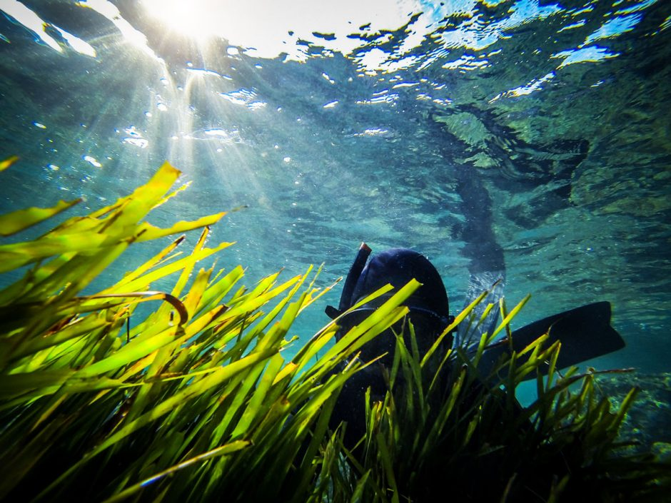 Action cams enable you to take brilliant photos underwater